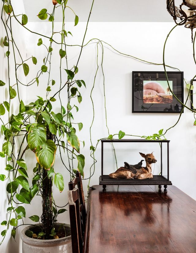 A House Of Gothic Curiosities | The Design Files | Bloglovin'