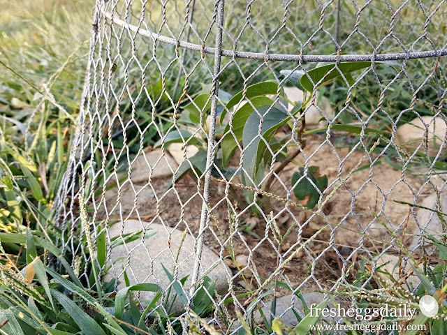Choosing the Right Fencing for your Chicken Coop, Run or Garden ...