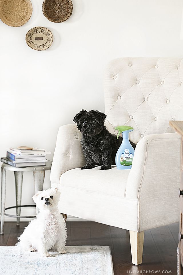 How to Keep Your House Clean with Dogs | Live Laugh Rowe
